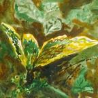 Gelber Falter - 2