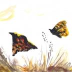 Zwei Perlmutterfalter - 1