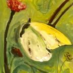 Zitronenfalter auf Blume - 1