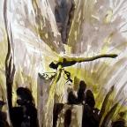 Libelle im Schilf