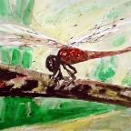 Rote Heidelibelle - 5