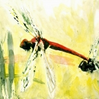Zwei Libelleni
