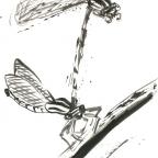 Libellenpaar - 4