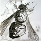 Schwebfliege - 1