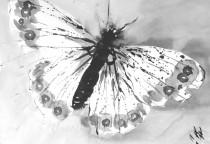 Insekten-Zeichnungen